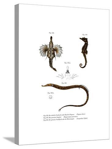 Short Dragonfish--Stretched Canvas Print
