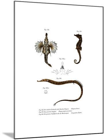 Short Dragonfish--Mounted Giclee Print
