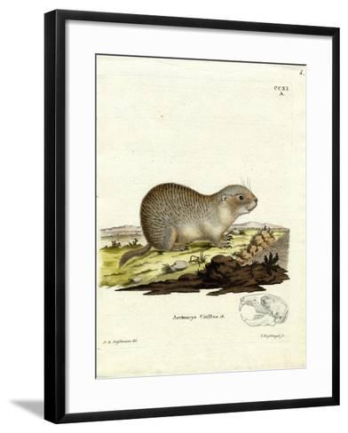 European Souslik--Framed Art Print