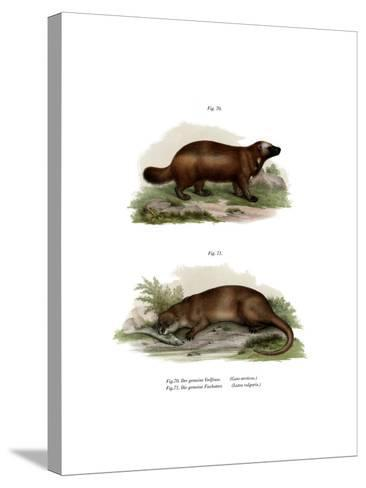 Wolverine, 1860--Stretched Canvas Print