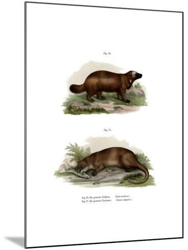 Wolverine, 1860--Mounted Giclee Print