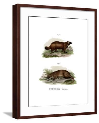 Wolverine, 1860--Framed Art Print