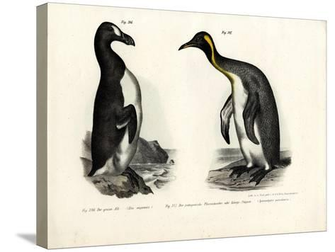 Great Auk, 1864--Stretched Canvas Print