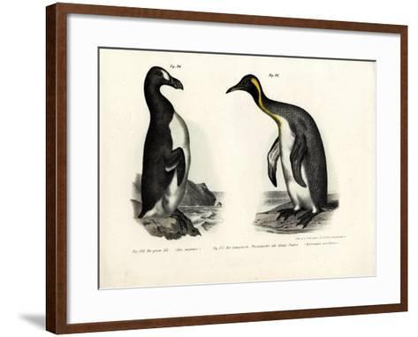 Great Auk, 1864--Framed Art Print