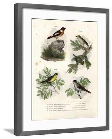 Stonechat, 1864--Framed Art Print