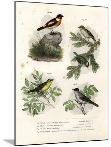 Stonechat, 1864--Mounted Giclee Print