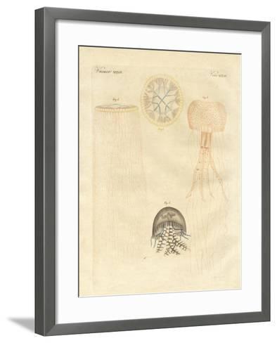 Strange Medusas--Framed Art Print