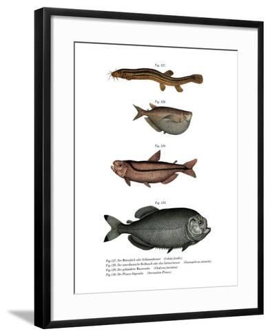Weather Loach--Framed Art Print