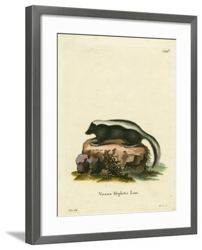 Striped Skunk--Framed Art Print