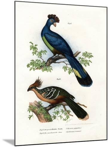 Great Turaco, 1864--Mounted Giclee Print