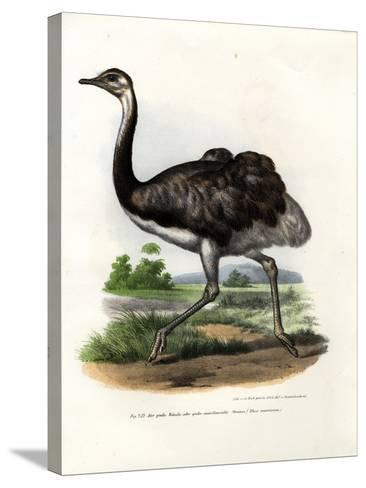 Greater Rhea, 1864--Stretched Canvas Print