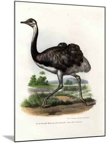 Greater Rhea, 1864--Mounted Giclee Print