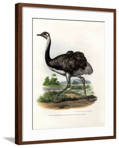 Greater Rhea, 1864--Framed Art Print