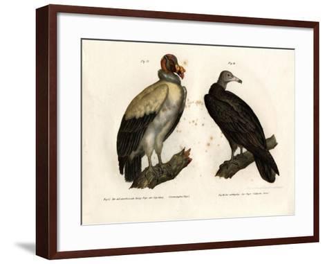King Vulture, 1864--Framed Art Print