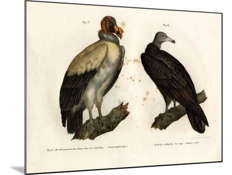 King Vulture, 1864--Mounted Giclee Print