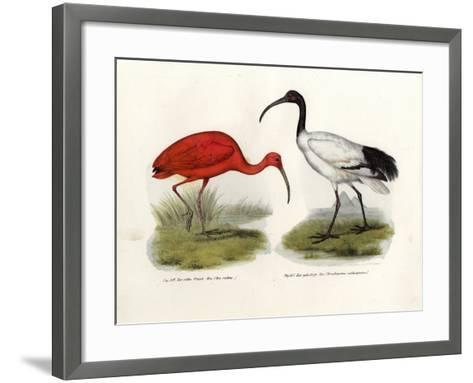 Scarlet Ibis, 1864--Framed Art Print
