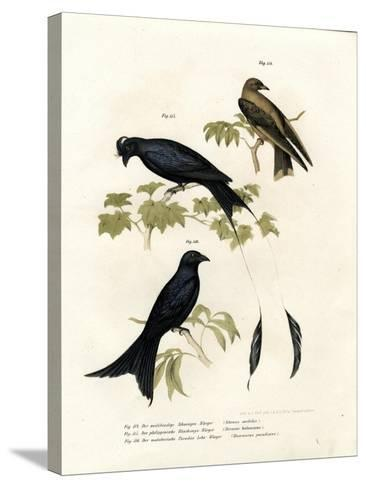 Wood Swallow, 1864--Stretched Canvas Print