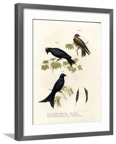 Wood Swallow, 1864--Framed Art Print