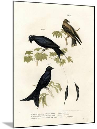 Wood Swallow, 1864--Mounted Giclee Print