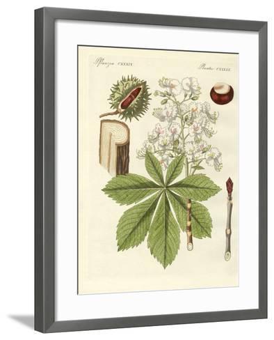 The Buckeyes Tree--Framed Art Print