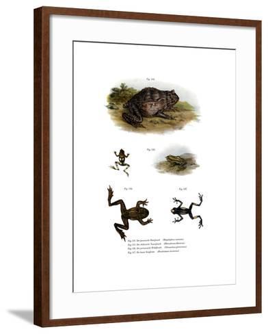 Asian Horned Frog--Framed Art Print