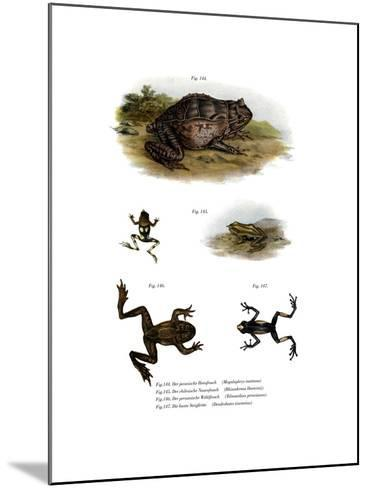 Asian Horned Frog--Mounted Giclee Print