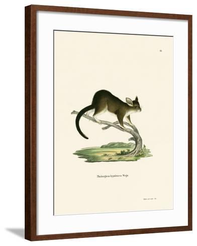 Brushtail Possum--Framed Art Print
