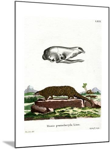 Chinese Pangolin--Mounted Giclee Print