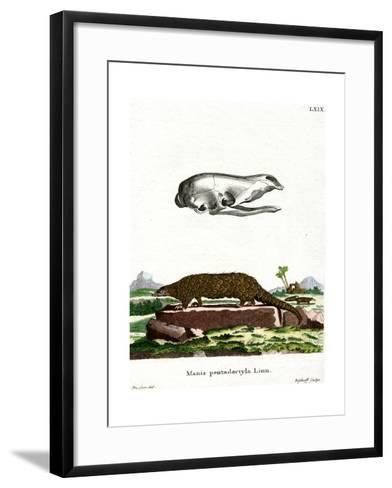Chinese Pangolin--Framed Art Print