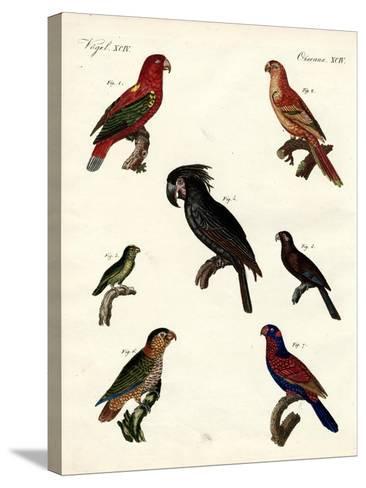 Strange Parrots--Stretched Canvas Print