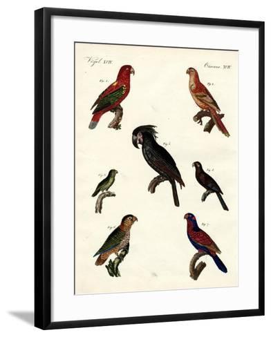 Strange Parrots--Framed Art Print