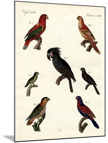 Strange Parrots--Mounted Giclee Print