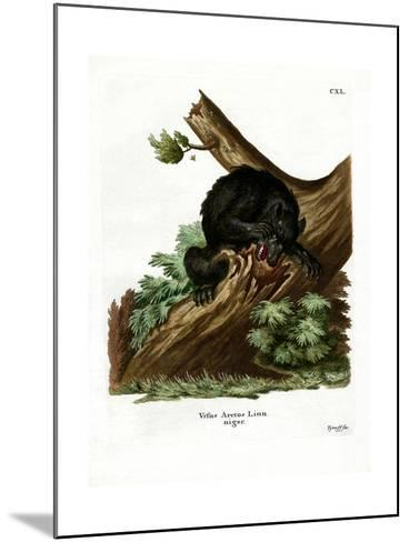 American Black Bear--Mounted Giclee Print
