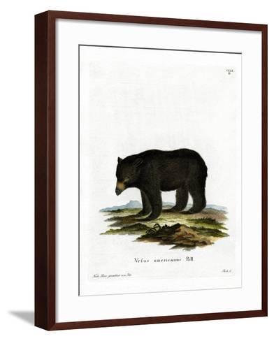 American Black Bear--Framed Art Print
