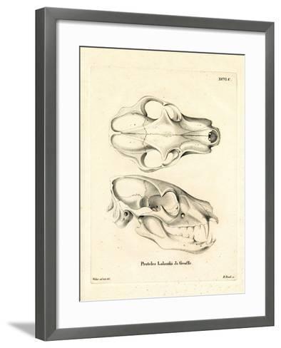 Aardwolf Skul--Framed Art Print