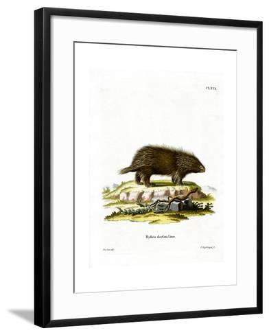 Canadian Porcupine--Framed Art Print