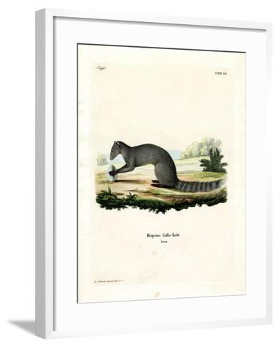Cape Grey Mongoose--Framed Art Print