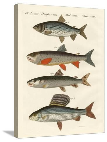 German River Fish--Stretched Canvas Print