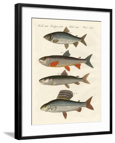German River Fish--Framed Art Print