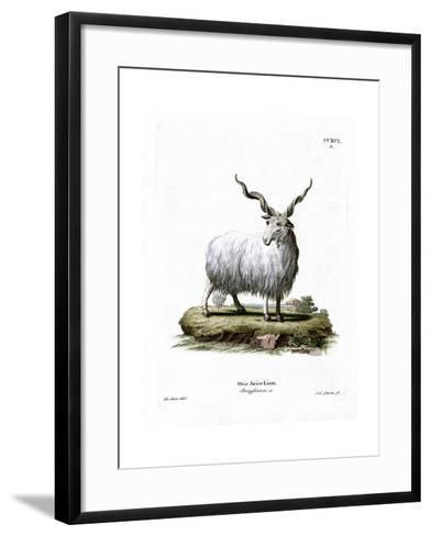 Wallachian Sheep--Framed Art Print