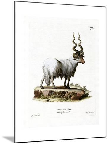 Wallachian Sheep--Mounted Giclee Print