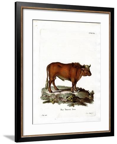 Domestic Cattle--Framed Art Print