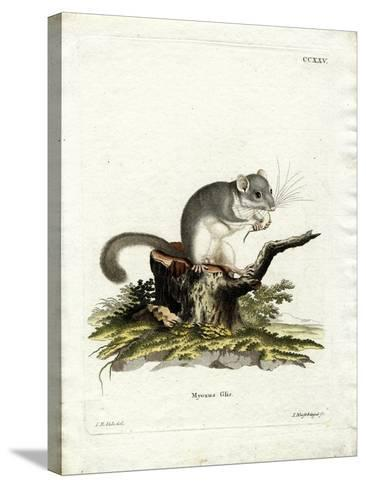Edible Dormouse--Stretched Canvas Print