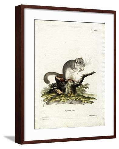 Edible Dormouse--Framed Art Print