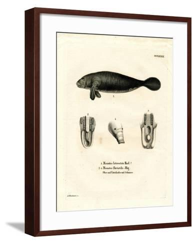 Florida Manatee--Framed Art Print