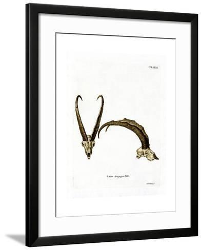 Wild Goat Horns--Framed Art Print