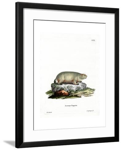 Canadian Marmot--Framed Art Print
