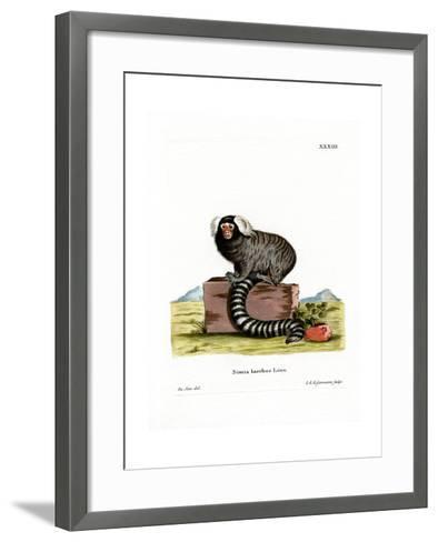 Common Marmoset--Framed Art Print