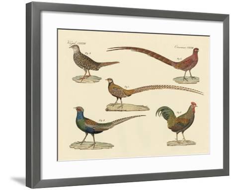 Beautiful Pheasants--Framed Art Print