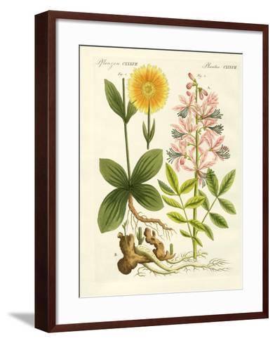Medical Plants--Framed Art Print